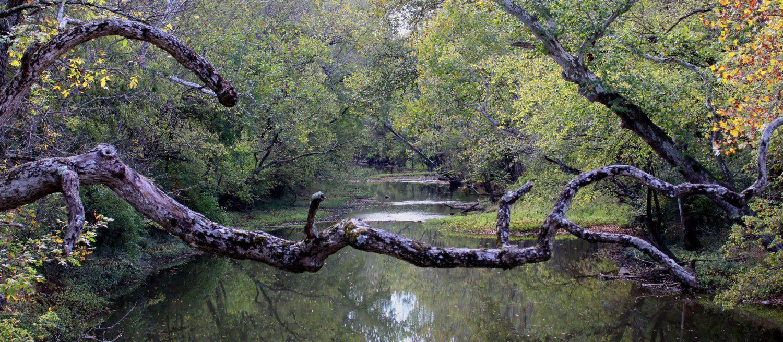 Central Ohio Nature