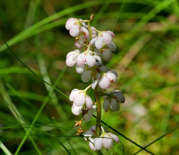 cluster white flowers1 071018 MI trip birdcam fix