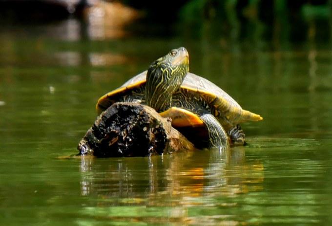 Map Turtle 1 LR1 062918 Alum Creek paddle birdcam fix